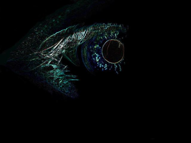 Anth's-Demon-Eye.jpg